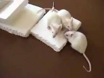 Утеплитель который не грызут мыши