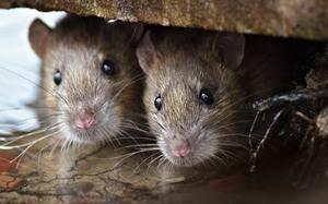 Что не грызут мыши