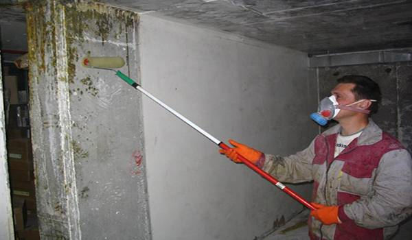 Чем можно вывести плесень на стенах