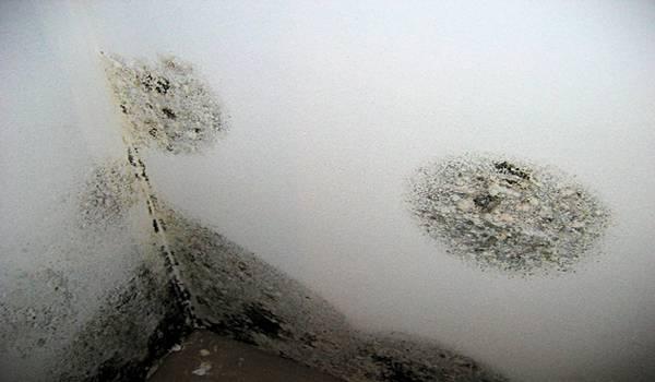 Как очистить стены от плесени