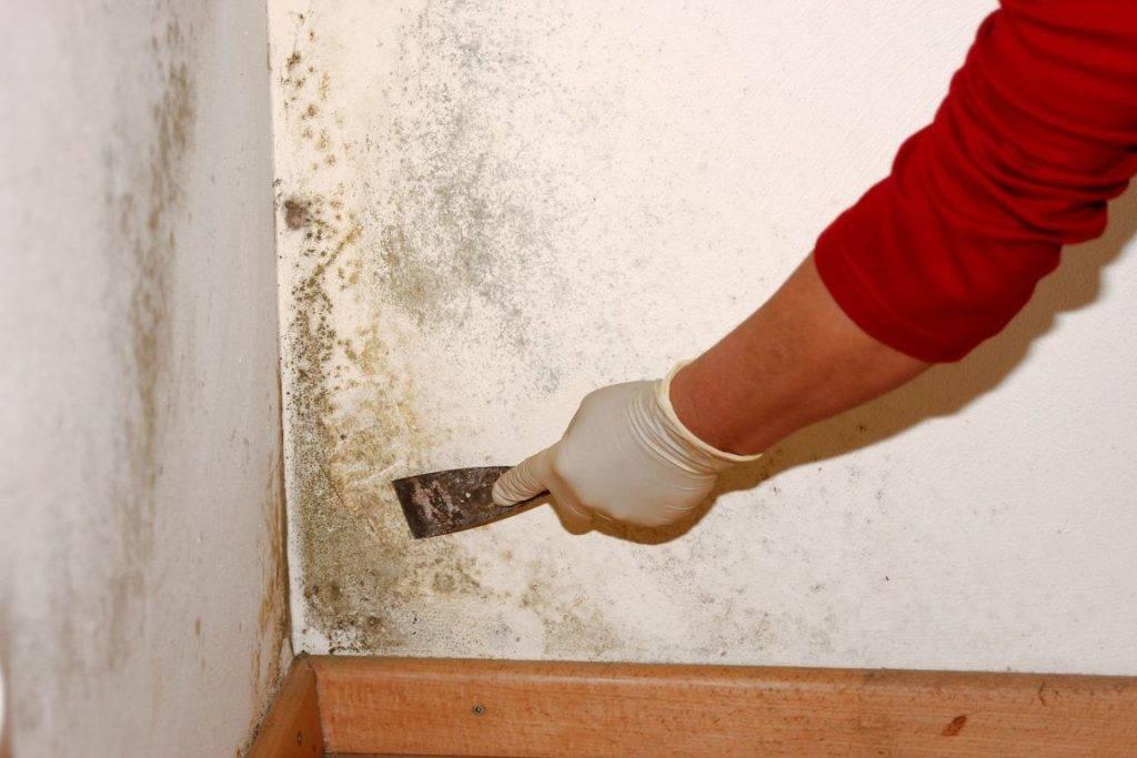 Как убрать грибок со стены в комнате