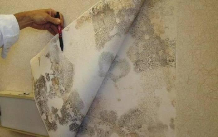 Как удалить черную плесень со стен
