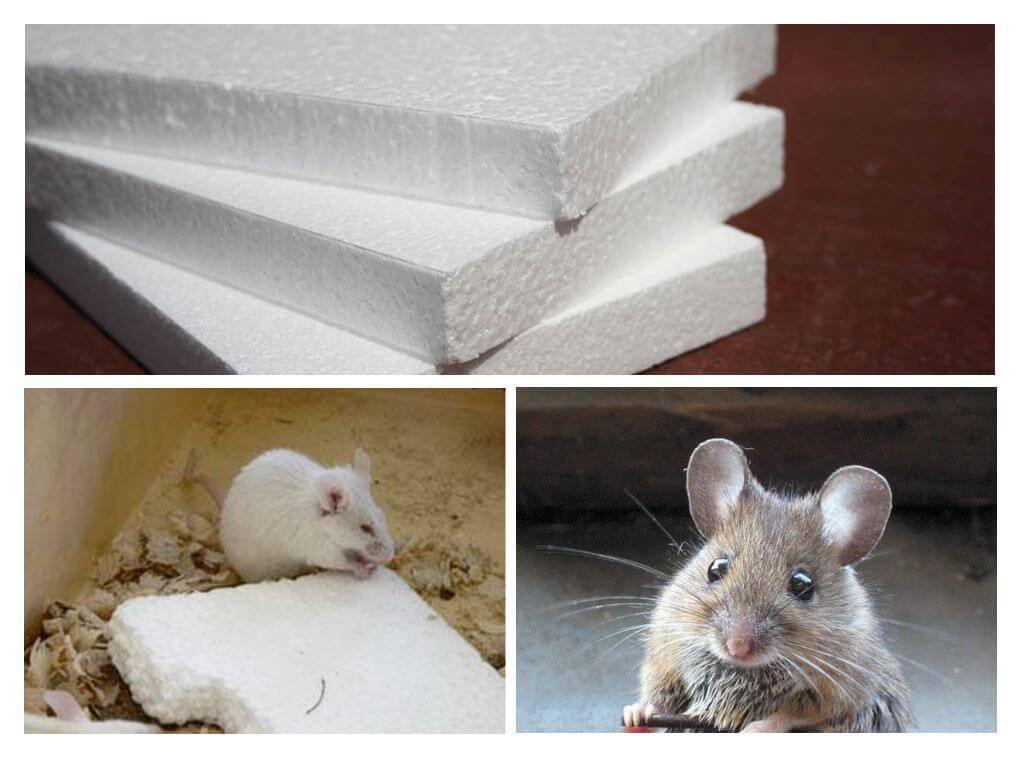 Бетон мыши бетон медведево